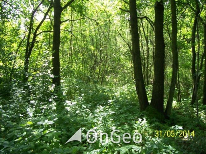 Sprzedam działkę gmina Borzęcin zdjęcie5