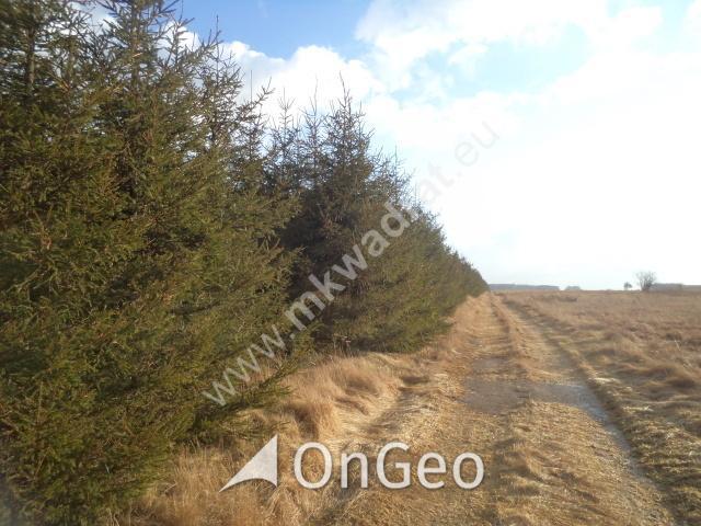 Sprzedam działkę gmina Nowy Kawęczyn zdjęcie5