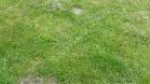 Nieruchomość Rewelacyjny teren dla poważnego dewelopera