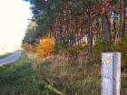 Nieruchomość Działki w lesie w Obrowie