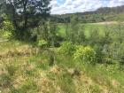 Nieruchomość Sprzedam działkę - Stara Rzeka