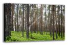 Nieruchomość Sprzedam 25- letni las sosnowy